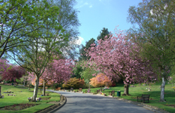 The trees at  Park Wood Crematorium