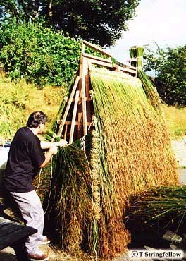 Thatching the Cart