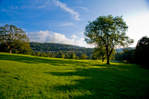 Shibden parkland